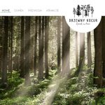 Projekt strony internetowej Drzewny Kocur - Domek w lesie - Clouds Agencja Reklamowa Białystok