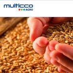 Multicco Agro - Projektowanie stron www - Białystok